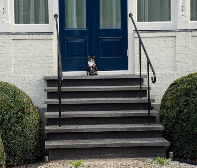 Kissa jäi odottamaan Nijmeegeniin.